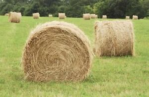 Hay for sale in Quesnel Prince George British Columbia image 1