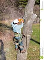 TREE REMOVAL - 25% OFF until JULY 30th