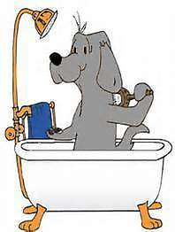 * DOG Wash N Clip  * DOG Mind N Play Birmingham Gardens Newcastle Area Preview