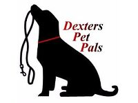 Professional and friendly Dog Walking, Pet sitting and Home Boarding