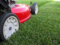 Flat rate monthly lawn care services 95$ most yards!