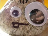 Pet rock looking for new bome