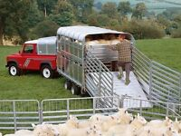 LOOKING FOR SOMEONE TO TRANSPORT SHEEP FROM DUNDALK TO HAMILTON