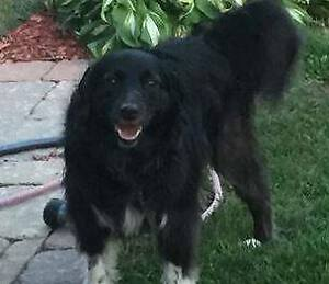 MISSING DOG IN PORT HOPE! - Tuesday March 19, 2019