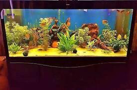 Tank fish 1000 liters