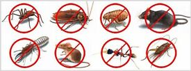 Professional Pest Control Services from £45
