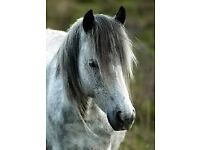 Horse to share in Milton Keynes