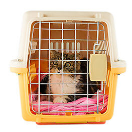 Wanted:  cat (or small dog) crate - for Rescue Transport