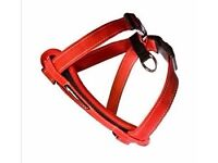 Pets At Home Red Dog Harness - Small