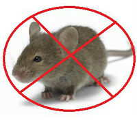 St. Catharines Pest Control Service- Rat, Mice, Bed Bugs Removal