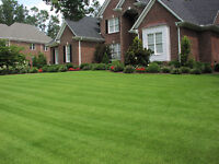 Lawn Cutting, Hedge trimming, Property Maintenance Services