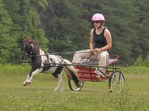 looking for miniature/small pony cart