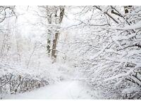 Snow Scene - Photography Backdrop