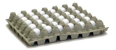 Bobwhite Quail Hatching Eggs Qty 50