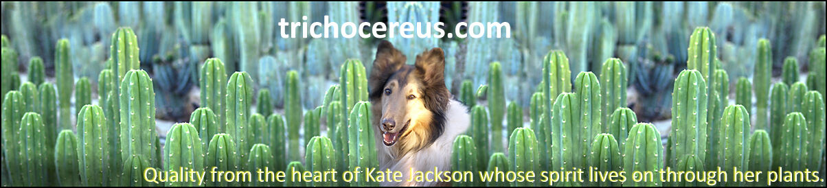 Cactus Kate® Trichocereus