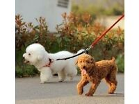 Duplex Double Dog Coupler Twin Lead 2 Way Two Pet Dogs Walking Leash Safety
