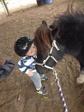 Milly mini pony mare Enfield Golden Plains Preview