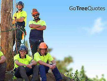 Melbourne Tree Removal Specialist