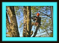 SKILLED, AFFORDABLE TREE SERVICES-Tree Removals,Pruning,Trimming