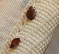 Bedbug Problems? We have Bedbug Solutions!