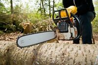 Tree Removal, BEST Rates in Town, FREE ESTIMATES!!!