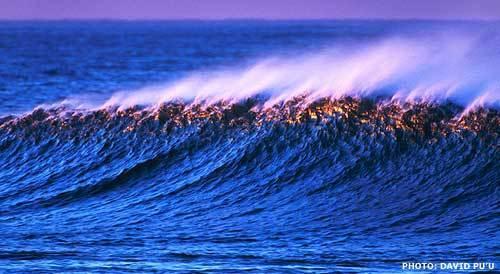Essential Surf Company LLC