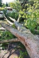 Wanted: Your Fallen Trees