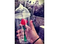 beauty and beast cup new