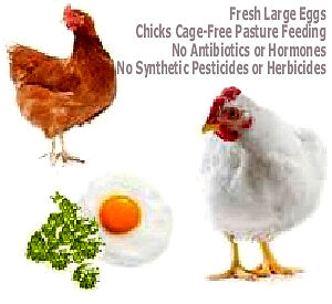 FRESH ORGANIC EGGS .. - ..  No Antibiotics ..  -  .. No Hormones