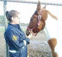 Walk to Fight Animal Cruelty-Friends for Life Walk SPCA Sudbury