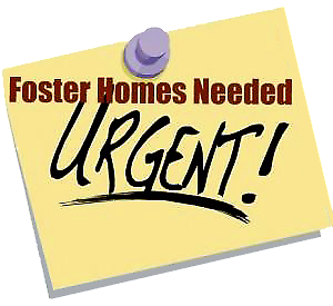 Foster Parents needed for Bunnies/ Rabbits NOW