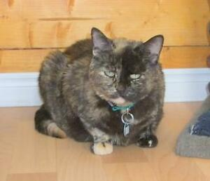 "Adult Female Cat - Tortoiseshell-Domestic Short Hair: ""Emma"""
