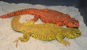 Several Lizards for sale