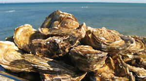 Oyster Bed in the Bay of Neguac (Malpec Rd) for sale