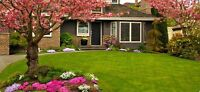 Spring Cleanup Package   COUPON/  Canadian Luxy Homes