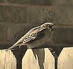 Blessed Sparrow Vintage Jewels