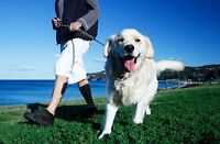 Dog Walking Services Available in Huntsville!
