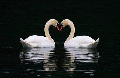 Ivory Swan Cosmetics Plus