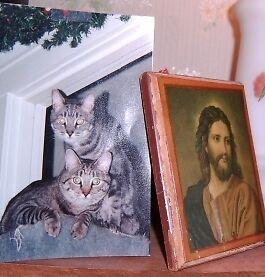 Casa De Cat