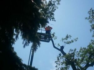 AFFORDABLE TREE REMOVAL & CONTRACTING SERVICE'S Cambridge Kitchener Area image 10