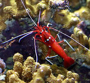 Aquarium cleaning and maintenance
