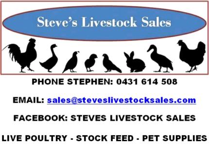 STEVE'S LIVESTOCK SALES ( CHICKENS, DUCKS, POINT OF LAYS, GRAIN