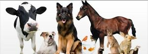 Dog walking and holiday animal care Bluewater Park Townsville Surrounds Preview