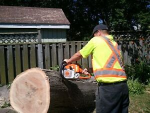 AFFORDABLE TREE REMOVAL & CONTRACTING SERVICE'S Cambridge Kitchener Area image 7