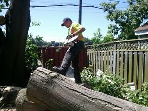 AFFORDABLE TREE REMOVAL & CONTRACTING SERVICE'S Cambridge Kitchener Area image 9