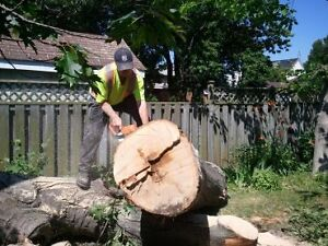 AFFORDABLE TREE REMOVAL & CONTRACTING SERVICE'S Cambridge Kitchener Area image 8