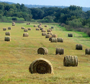 Hay Land Wanted