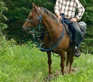 Tennessee Walking Horse for Sale