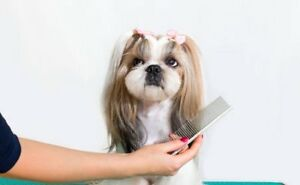 Find or advertise pet animal services in cambridge pets kijiji looking for experienced pet groomer to join our team solutioingenieria Gallery