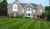 Grass Cutting/Lawn Maintanence